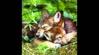 Litości dla wilków