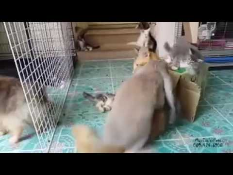 Rammelt kaninchen Häsin rammelt