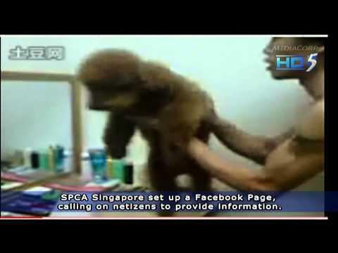 Malaysia Dog (named Sushi) Abusers Exposed~! 26Jan2011