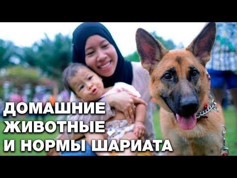 Вопрос: Каких животных можно держать дома (собаки и коты не в счет)?