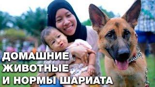 Можно ли мусульманам держать дома собаку? Спросите имама
