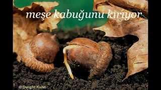 ağaç tohumları nasıl çimlendirilir