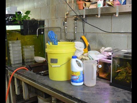 disinfecting aquarium equipment