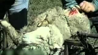 UGG New Ugly Truth FUR Animal Abuse Cavemen Sheepskins Pink (boots collection fake animals peta)