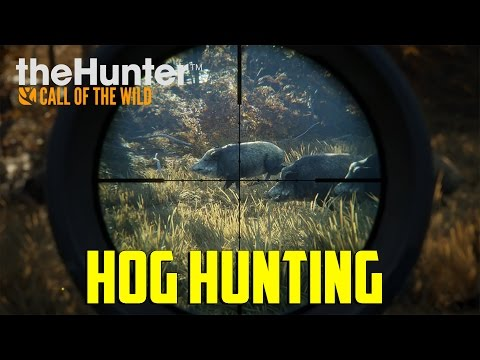 Call Of The Wild - Hog Hunting