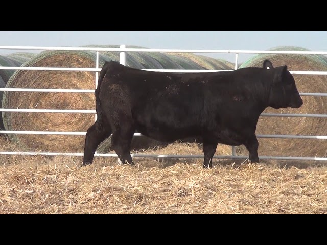 Express Ranches Lot 174