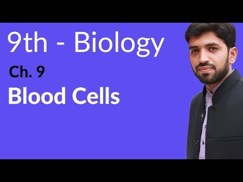 Blood Cells Biology - Biology Chapter 9 Transport biology - 9th Class