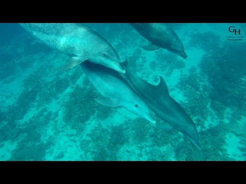Swimming With Dolphins - wonderful experience