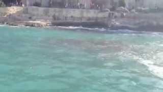 Jellyfish Infestation In Sliema,malta.