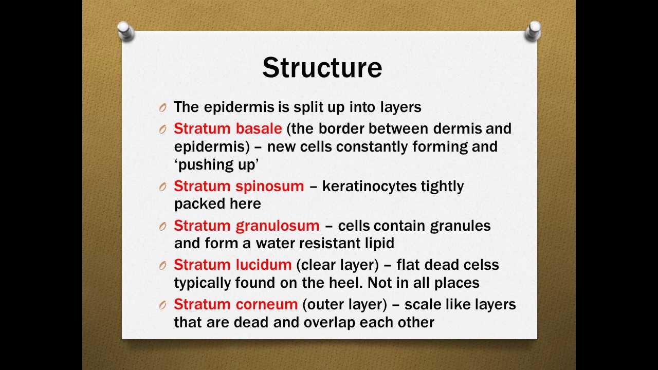The Skin Structure and Function Revision - YouTube