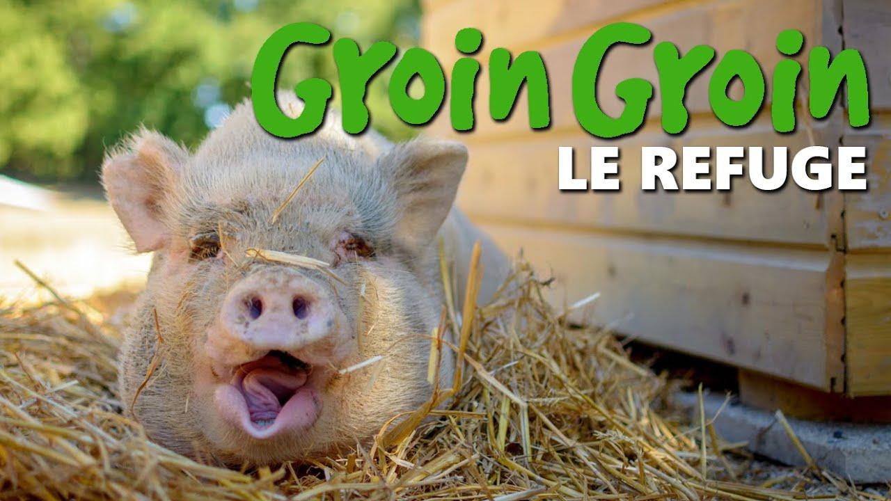 GroinGroin - Le Refuge - YouTube
