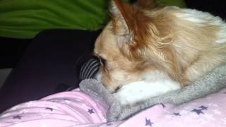 Perro Mamando (SUSCRIBETE AL CANAL)dog Sucking