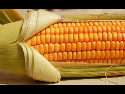 Как быстро высушить кукурузу для попкорна