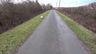"""Staffordshire Bull Terrier ( """"jigga""""  11 Month Old )"""