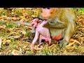 Ah! What mum doing on new baby ?Newborn angry mum much more | New baby hungry milk #887