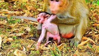Ah What mum doing on new baby Newborn angry mum much more  New baby hungry milk 887