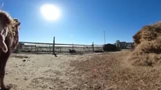 Видео 360: верблюды – новые