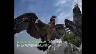 Fundación Temaikèn - Programa de conservación Cóndor Andino