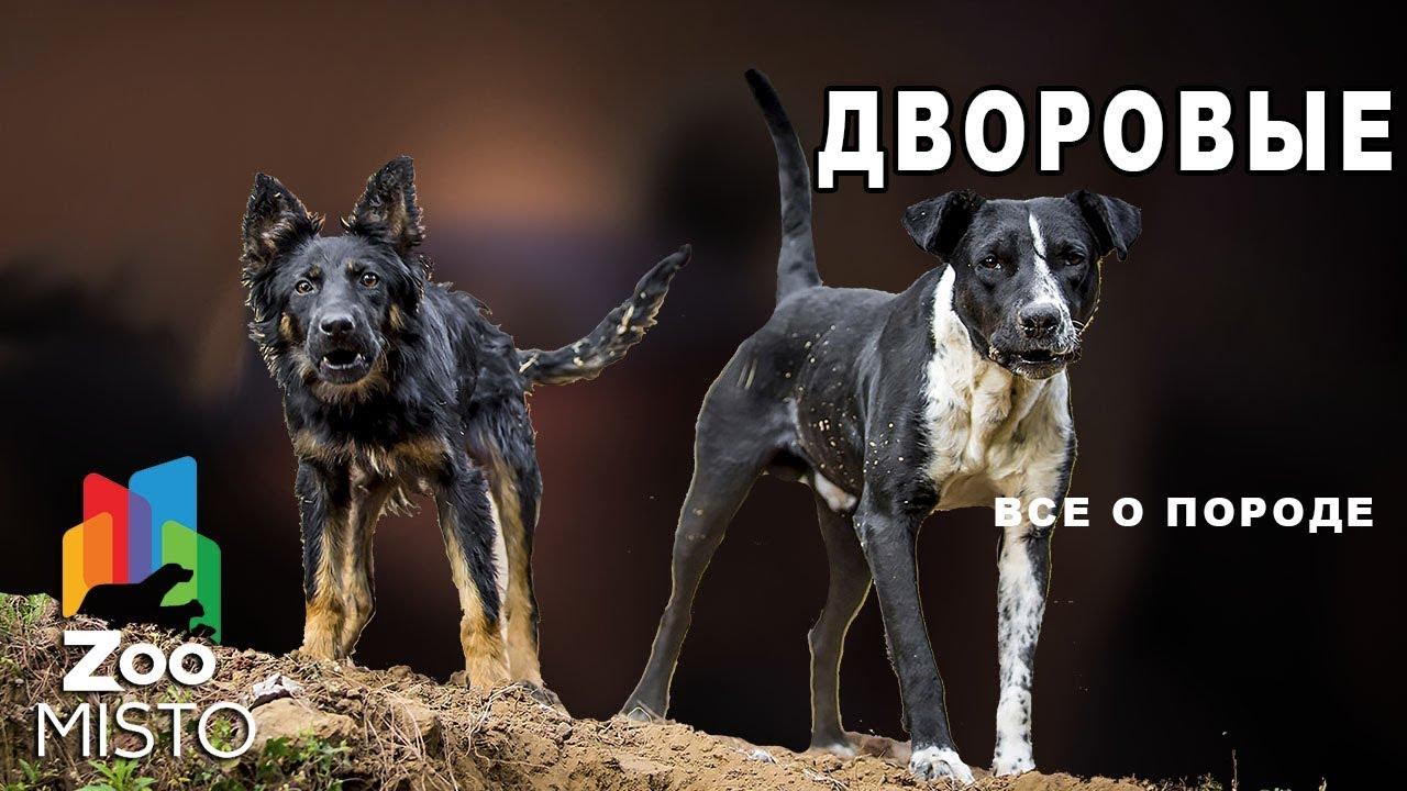Дворовые - Все о породе собак | Собаки пород дворовые