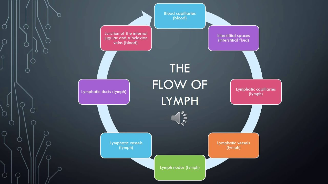 the lymphatic system - flow of lymph