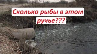 Сколько рыбы в этом ручье Рыбалка весной на поплавок