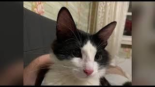 IPhone сделал видео про моего кота Василия / IPhone Created Video Presnetation About My Cat Vasiliy