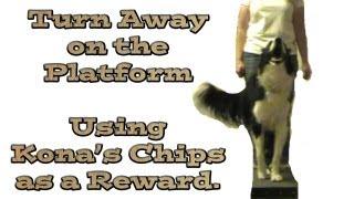 Turn Away Trick: Kona's Chips As A Reinforcer - Clicker Training