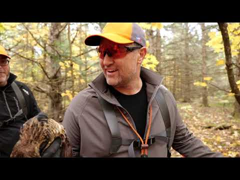 Beaver Island Grouse Hunting, Youth Deer Hunt; Michigan Out Of Doors TV #2044
