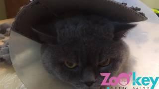 Стрижка кошек без наркоза опытным мастером.(, 2016-08-23T20:43:55.000Z)