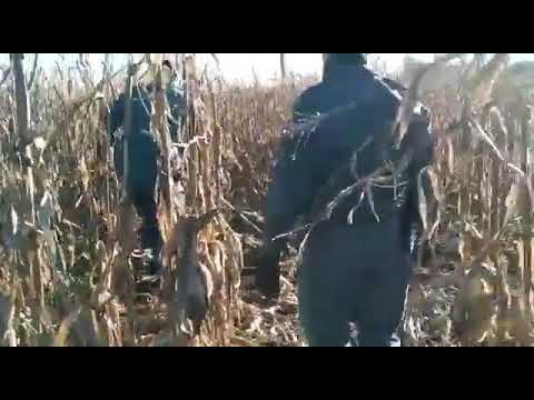 Guardia Civil León: libera a un lobo en Valdesandinas