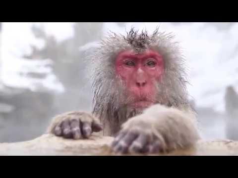 Monkey Business in Antarctica - Robert Sepehr