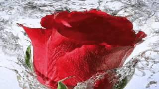 vuclip Los Temerarios - No Me Hace Falta Tu Amor Con Letra