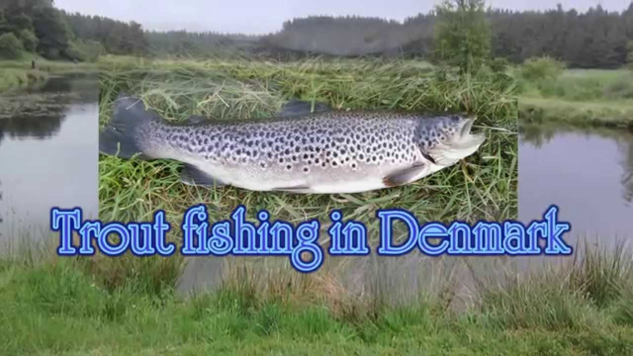 Trout fishing put take lemvig denmark youtube for Youtube trout fishing