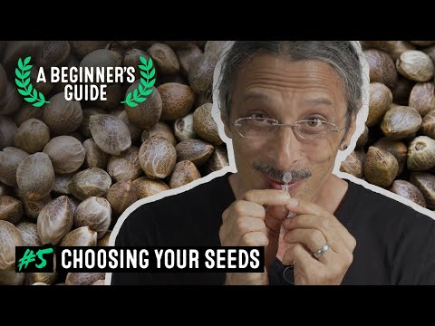 A Beginner's Guide with Kyle Kushman. EP 5: Choosing Your Seeds