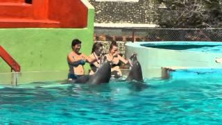 Kuba Delfine