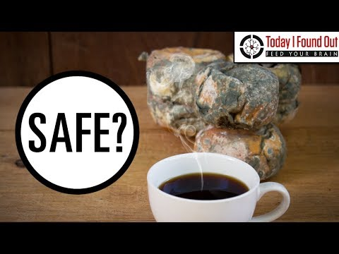 Is It Safe to Eat Moldy Bread or Moldy Cheese?