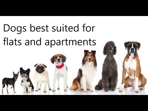 Dogs suitable for small apartments/flats in India,