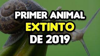 Primer Animal Extinto de 2019