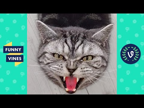 TRY NOT TO LAUGH  Funny Cats and Cute Kittens