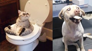 Try Not To Laugh Watching Funny Animals Compilation - Funniest Animals Vines (2020)