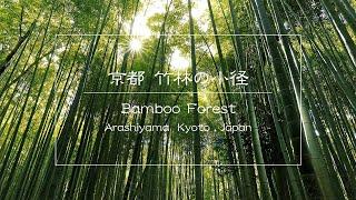 時空の栞 -Bamboo forest in Arashiyama,Kyoto Lumix DMC-LX100-