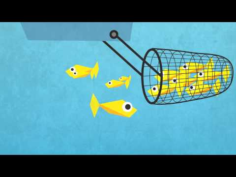 Explanimation Overfishing
