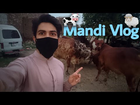 Full Download] Peshawar Mandi