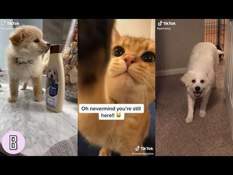 Tik Tok Pet videos l Cute & Funny & Scary (?!) l Finding Coconut