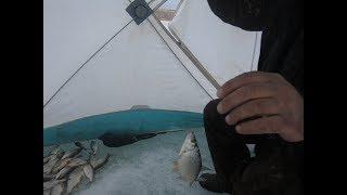 Вот это рыбалка Классный клев сороги на закрытие сезона зимней рыбалки 2019 г
