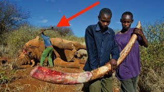 8 Ugly Truths About Poaching In Africa