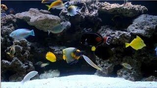 225 gallon fowlr saltwater fish tank update