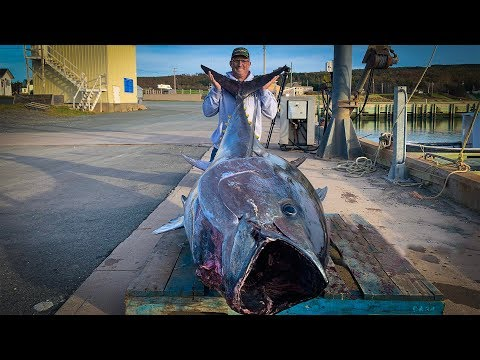 $1,000,000.00 FISH {Catch Clean Cook} GIANT BlueFin TUNA!!!