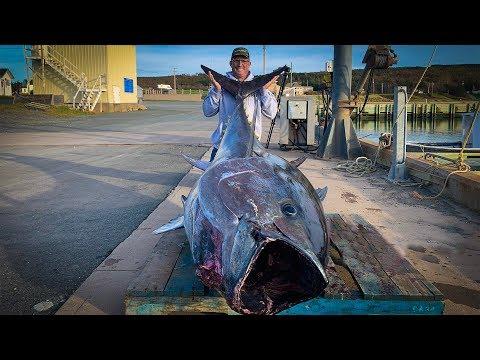 $1,000,000.00-fish-{catch-clean-cook}-giant-bluefin-tuna!!!