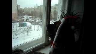 Джек любит смотреть в окно.
